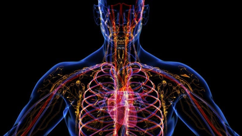 How Vibration Exercise Machines Improve Your Lymphatic Health